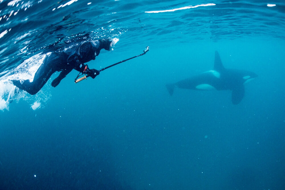 Snorkelling with orcas and humpbacks during the winter herring run in Norway's northern fjords. Photo by Göran Ehlmé of Waterproof International is courtesy of Waterproof Cruises & Expeditions.